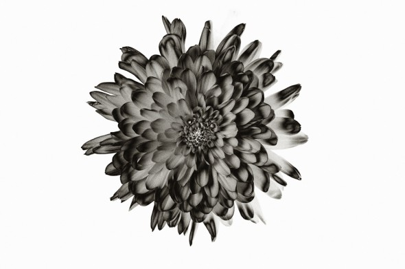 X-Ray Flower